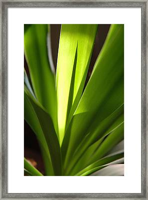 Green Patterns Framed Print by Jerry McElroy