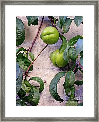 Green Peaches Framed Print by Sarah Loft