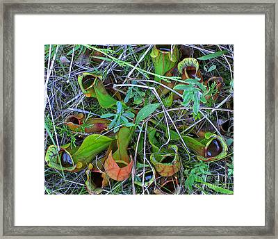 Northern Pitcher Plant Framed Print by Ann Horn