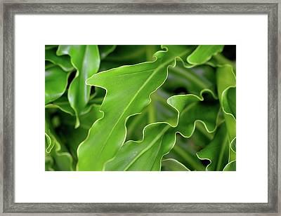 Green Plant Framed Print by Tamra Lockard
