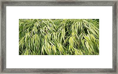 Green Plants Framed Print