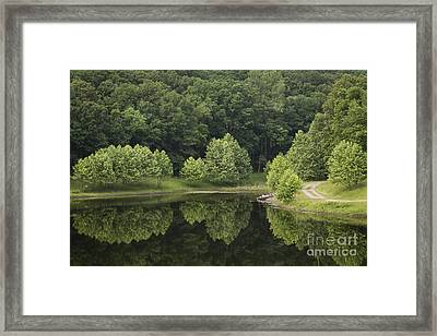 Green Reflections Framed Print by Andrea Silies
