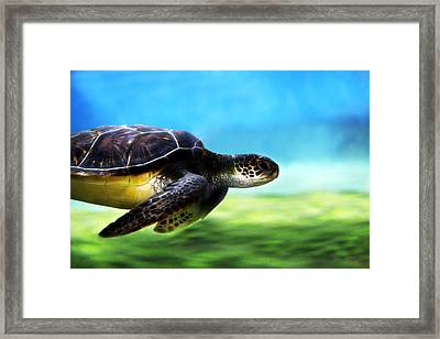 Green Sea Turtle 2 Framed Print by Marilyn Hunt