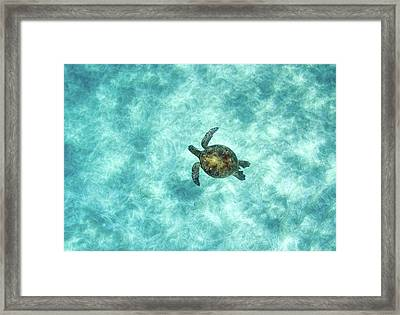 Green Sea Turtle In Under Water Framed Print by M.M. Sweet