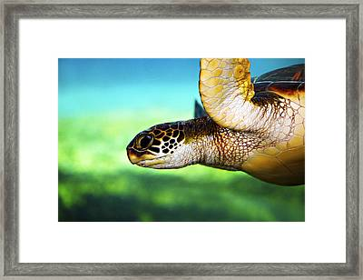 Green Sea Turtle Framed Print by Marilyn Hunt