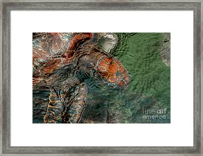 Green Sea Turtle Under Water Framed Print by Jacques Jacobsz