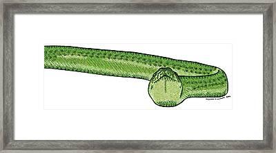 Green Snake Framed Print by Karl Addison