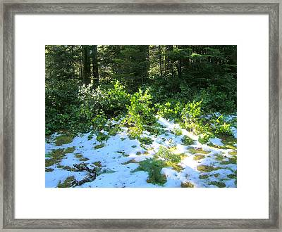 Green Snow Framed Print