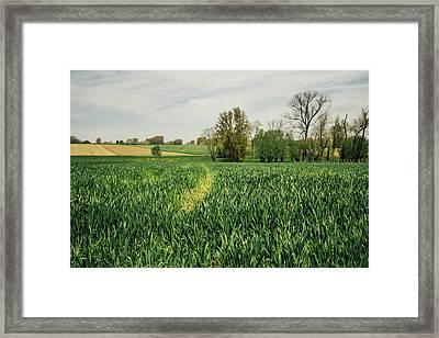 Green Spring Crop Field Framed Print
