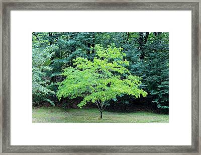 Green Standout Tree Framed Print
