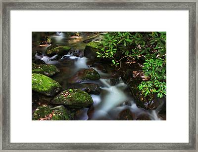 Green Stream Framed Print