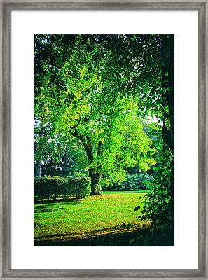 Green Summers Day Framed Print by Niel Morley