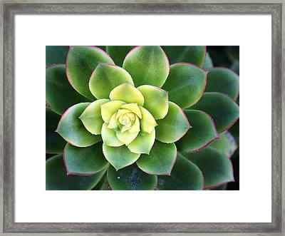 Green Sunburst Framed Print by April Reppucci