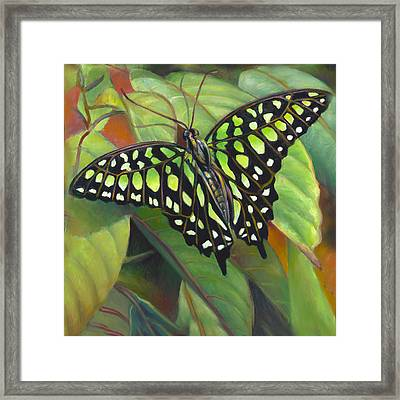 Green Tailed Jay Butterfly Framed Print by Nancy Tilles