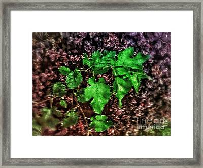 Green To Brown Framed Print by Olga Lyakh