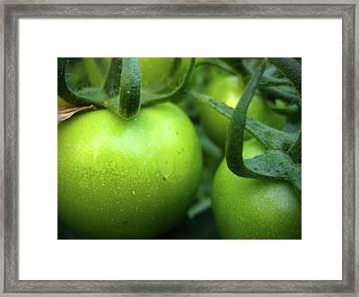 Green Tomatoes No.2 Framed Print by Kamil Swiatek
