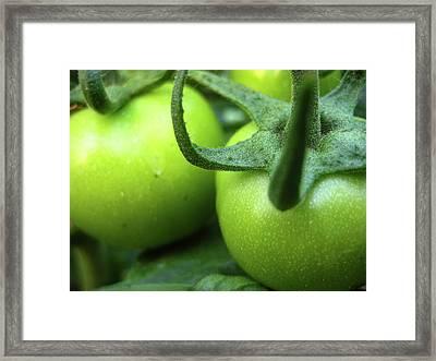 Green Tomatoes No.3 Framed Print by Kamil Swiatek