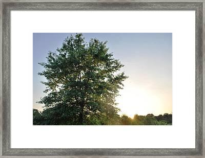 Green Tree Bright Sunshine Background Framed Print