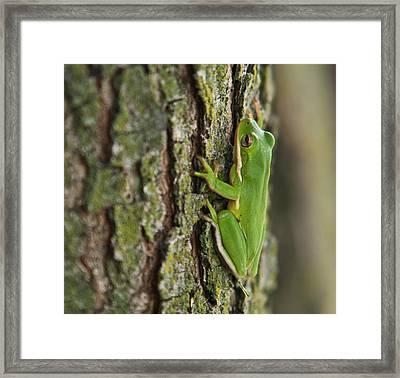 Green Tree Frog Thinking Framed Print by Douglas Barnett