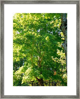 Green Tree In Park 3 Framed Print by Lanjee Chee