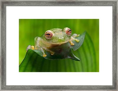 Green Tropical Glass Frog Framed Print