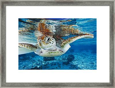 Green Turtle Framed Print