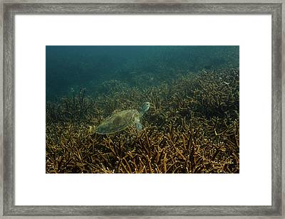 Green Turtle  Framed Print by Tracey Jones