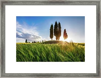 Green Tuscany Framed Print by Evgeni Dinev