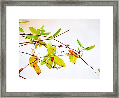 Green Twigs And Leaves Framed Print