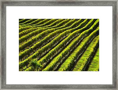 Green Vineyard Field Framed Print by Dan Sproul
