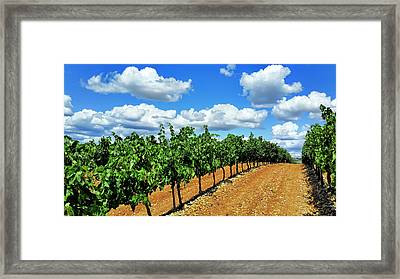 Green Vineyard White Clouds Framed Print