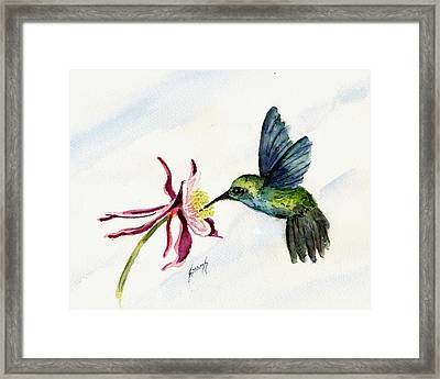 Green Violet-ear Hummingbird Framed Print