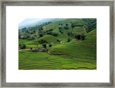 Green Wave Framed Print by M Yousuf Tushar