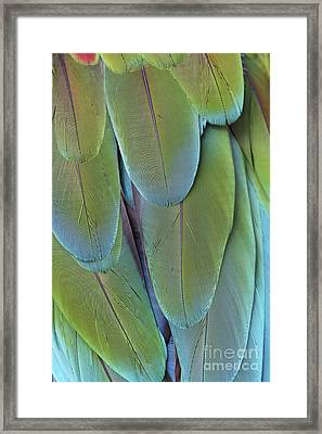 Green-winged Macaw #4 Framed Print