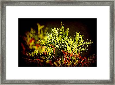 Green World Framed Print by Milena Ilieva