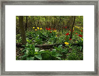 Green Yellow And Red - Tulip Forest Impressions  Framed Print by Georgia Mizuleva