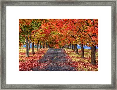 Greenbluff Autumn Framed Print