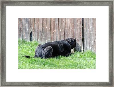 Greener Grass Framed Print