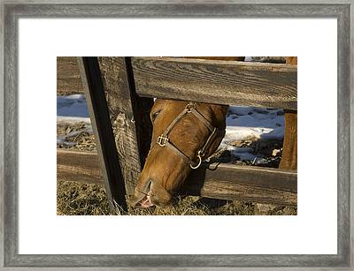 Greener On The Other Side Framed Print by William A Lopez