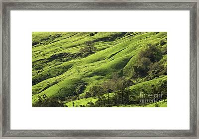 Greener Pastures Framed Print by Matt Tilghman