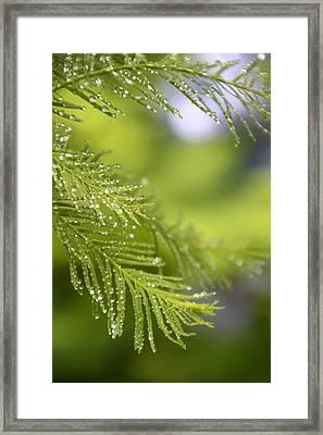 Greenery 1318 Framed Print by Carolyn Stagger Cokley