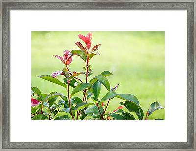 Greenery And Red Framed Print