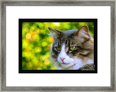 Greeneyes In Forest Framed Print
