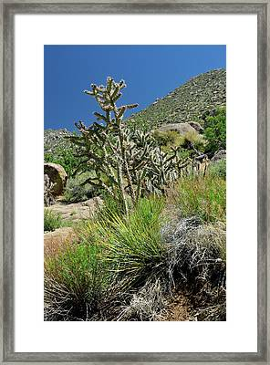 Greening Of The High Desert Framed Print