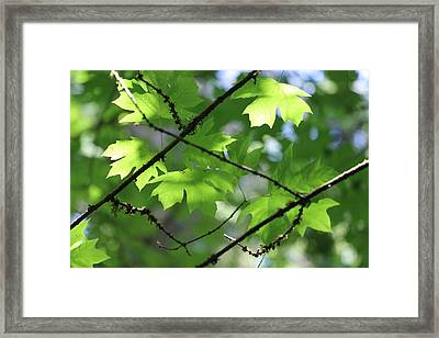 Greenleaves Framed Print