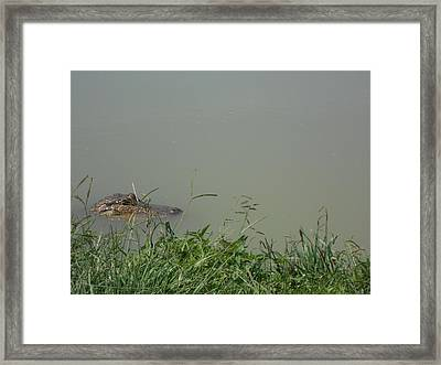 Greenwood Gator Farm Framed Print