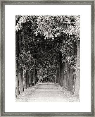 Greeted By Trees Framed Print