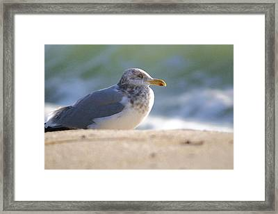 Greeting The Morning Framed Print by Mary Haber