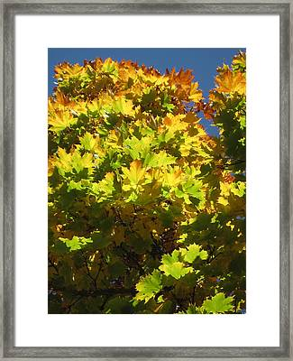Grellow Framed Print by Andy  Torraco