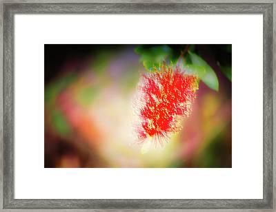 Grevillea Dream Framed Print